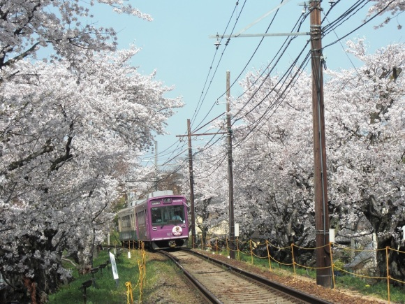 kyoto travel v1